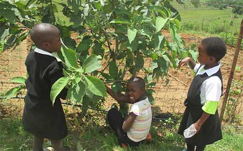 Children picking fruit on the way to school